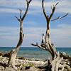 twisted trees bonaire 090613